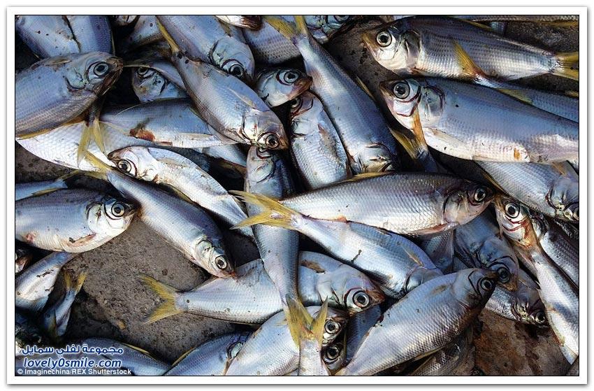 آلاف الأسماك تموت على ضفاف نهر بالقرب من تيانجين الصينية