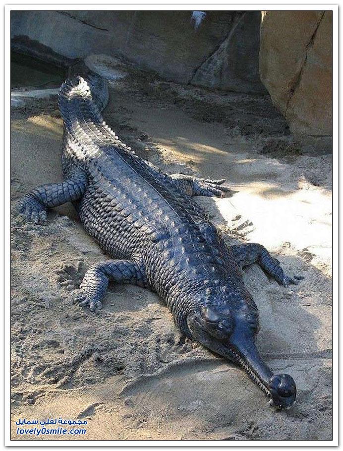 حيوانات مهددة بالإنقراض