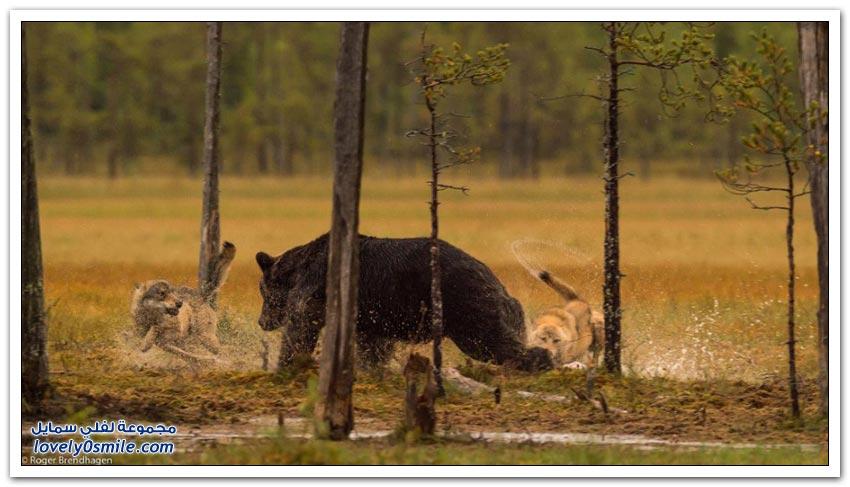 حيوانات الدول الاسكندنافية