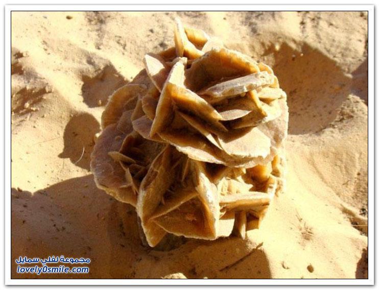 وردة الصحراء في دول شمال أفريقيا