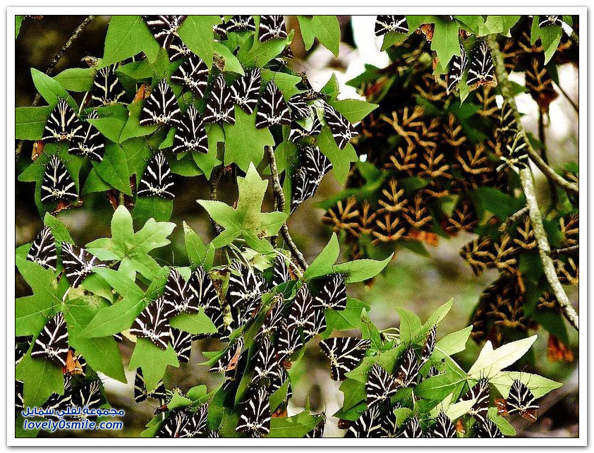 وادي الفراشات في جزيرة رودس اليونانية
