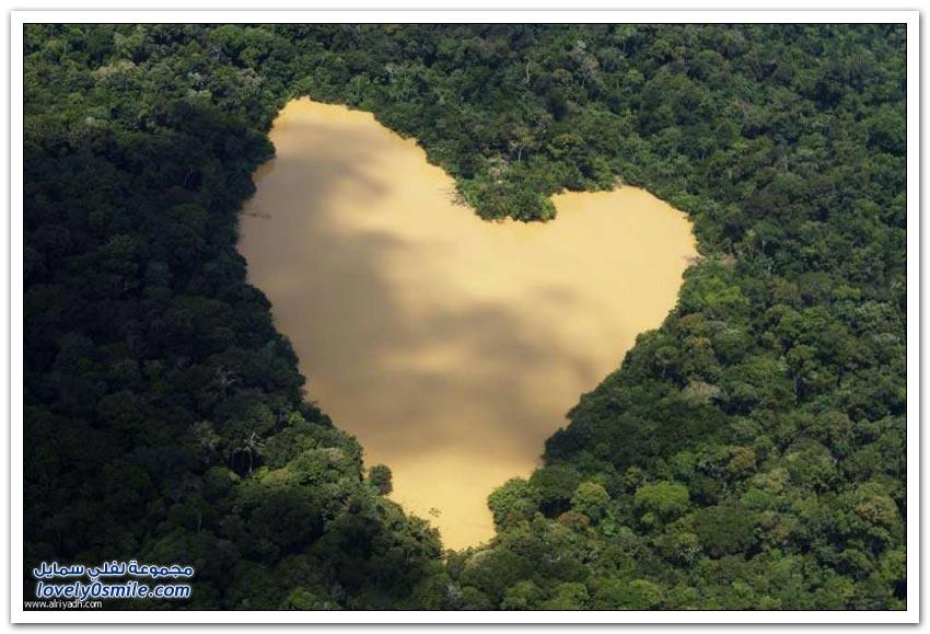 تهديد غابة الأمازون