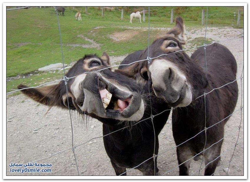 صور طريفة لحيوانات تم التقاطها في اللحظة المناسبة