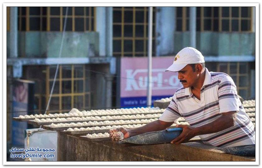 هندي يُطعم أكثر من 4000 ببغاء يوميا منذ 10 أعوام