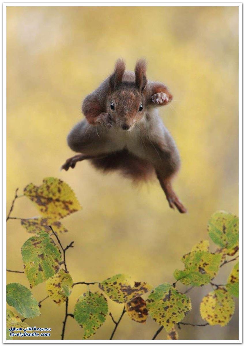 مسابقة التصوير الفوتوغرافي للحياة البرية