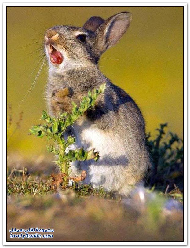 ردة فعل أرنب أكل نبات فيه شوك