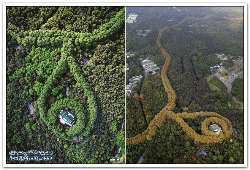 قصر يشبه القلادة العملاقة على قمة شياو هونغ هيل