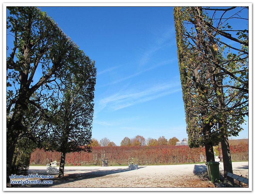 جمال الأشجار المحيطة بقصر شونبرون في فيينا