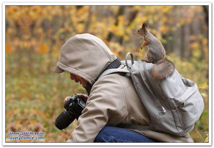 متعة تصوير الحياة البرية