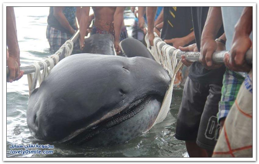 أسماك القرش الغير مألوفة