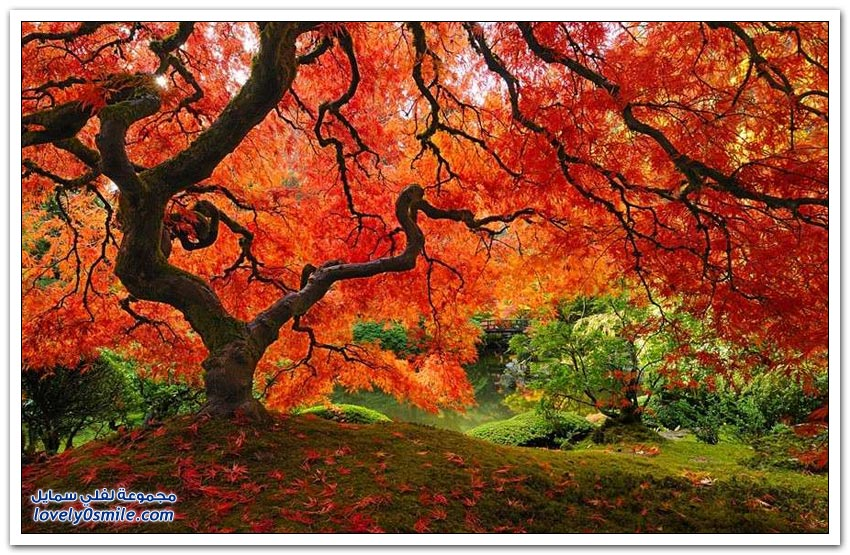 الأشجار الأكثر تميزاً في العالم