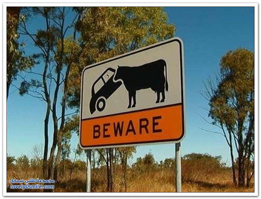 الحيوانات القاتلة في أستراليا