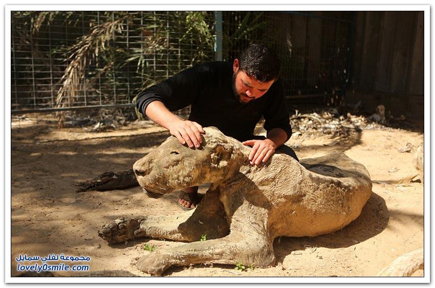 حيوانات ماتت جوعاً في حديقة الحيوانات في غزة