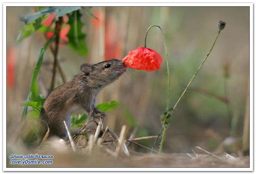 حتى الحيوانات تستمتع بريحة الزهور