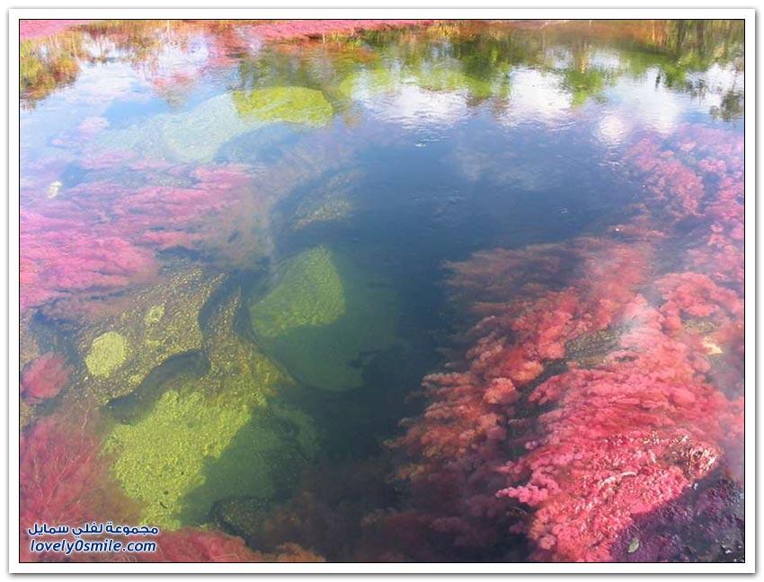 كانيو كريستيلز - النهر الأكثر جمالا في العالم