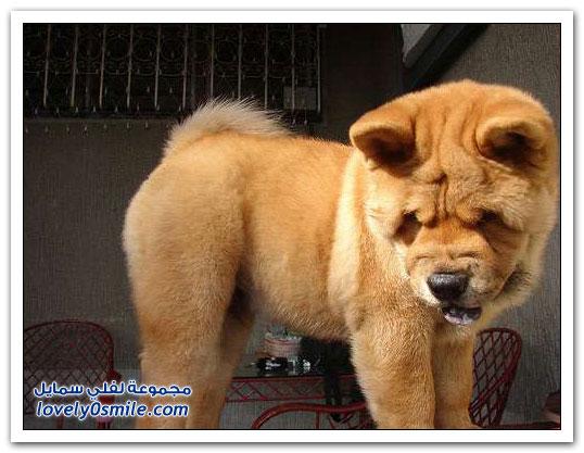 الكلاب الأكثر خطورة حول العالم