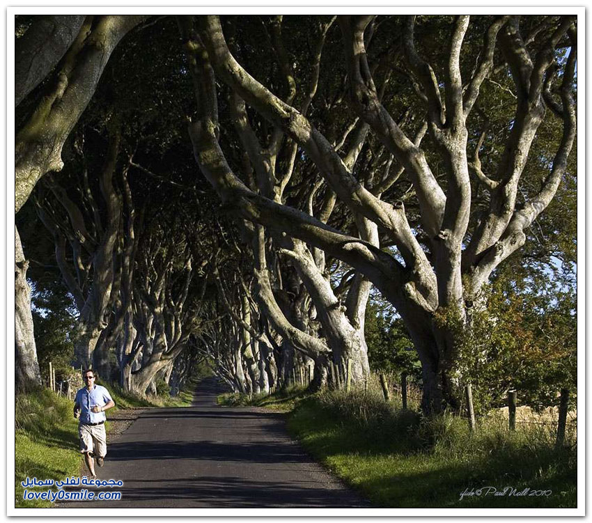 شارع الزان - نفق أشجار الزان في إيرلندا