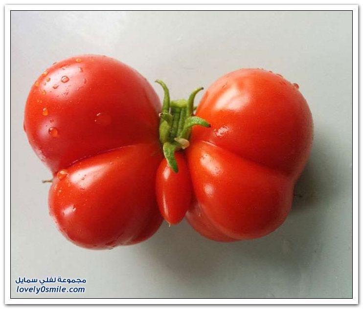 الخضروات والفواكه بأشكال عجيبة