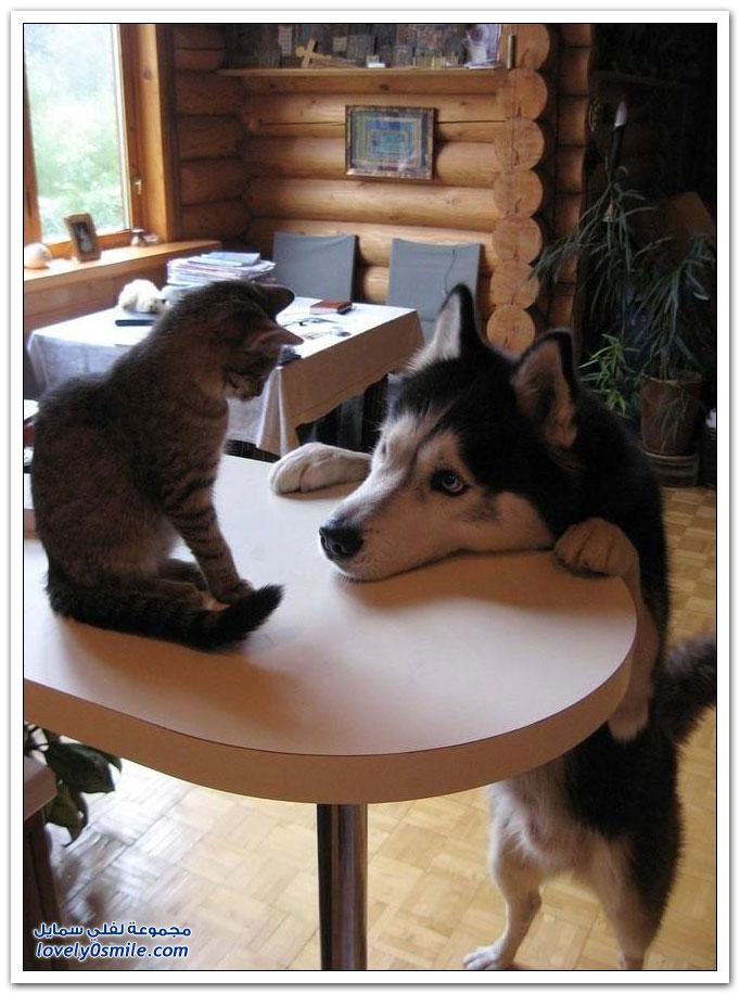 صداقة القطط مع الكلاب