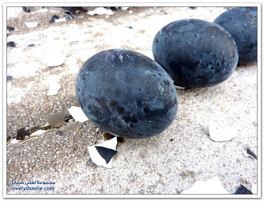 البيض الأسود في اليابان