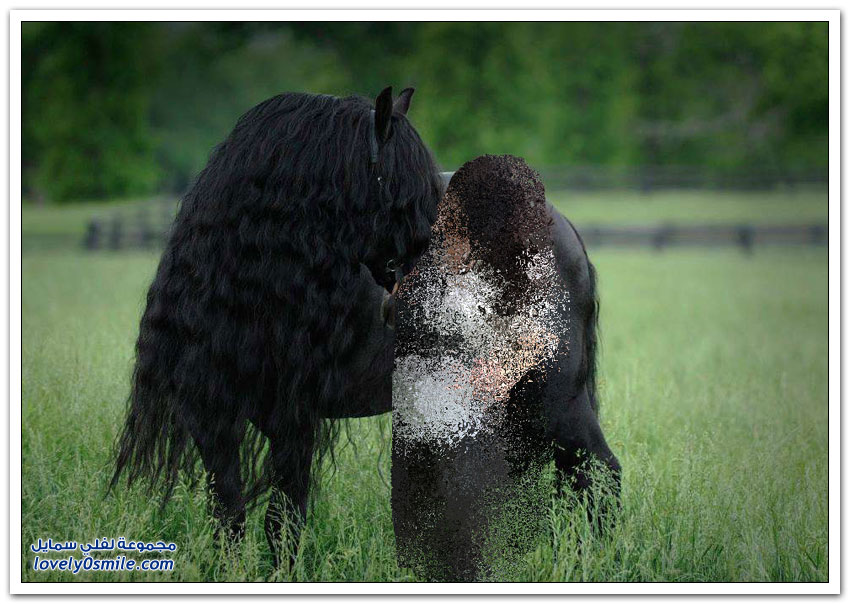الحصان الأكثر جمالا في العالم