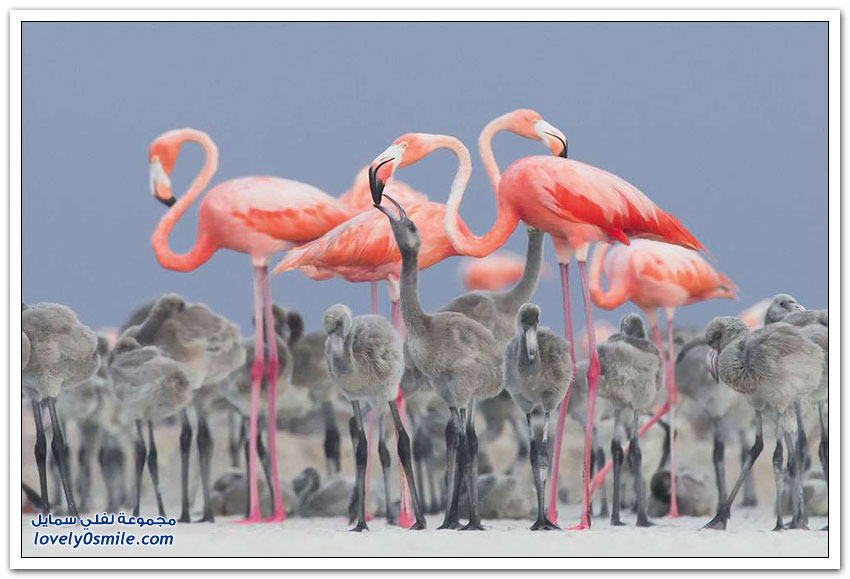 أفضل الصور لطيور العالم 2017م