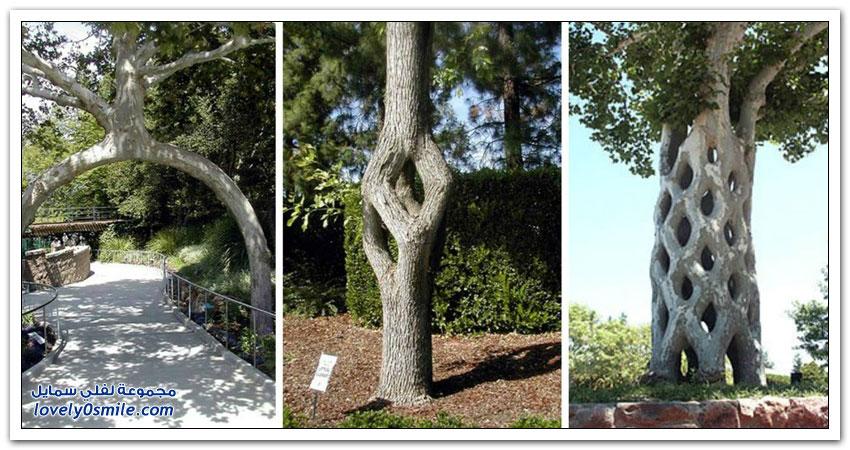 فن تشكيل الشجر