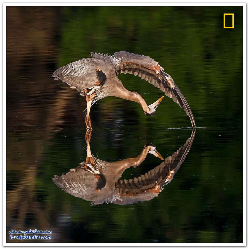 مسابقة صور ناشيونال جيوغرافيك لعام 2017م