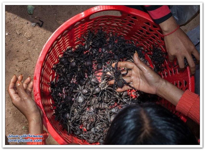 أكل العناكب في كمبوديا