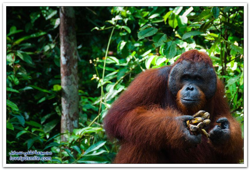 أشهر 10 معالم سياحية في إندونيسيا