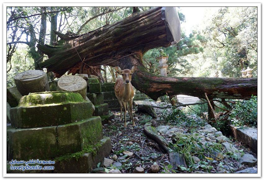 صور من الدمار الذي خلّفه إعصار جيبي في اليابان