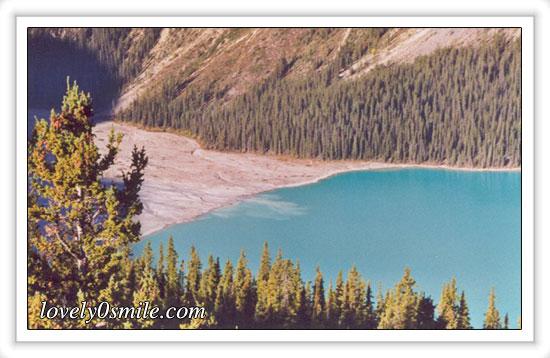 غابات الصّنوبر بكندا - صور