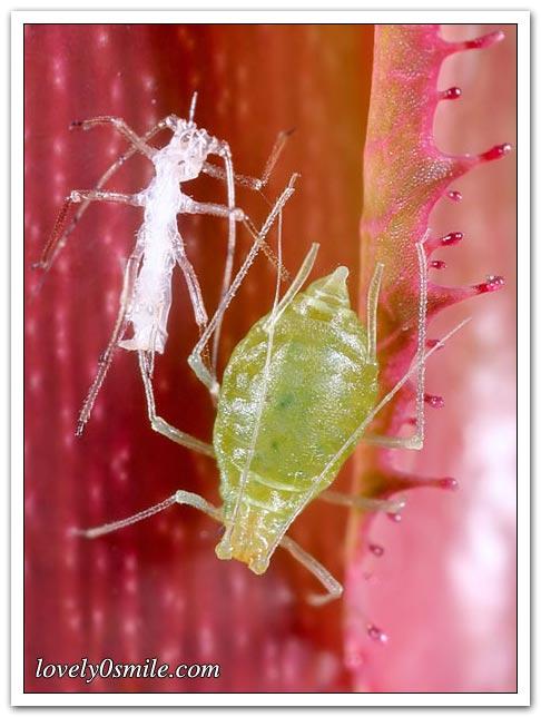 أنواع من الحشرات - صور