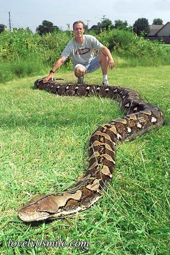 ����� ���� ������ snake-10.jpg