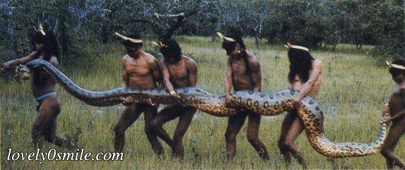 ����� ���� ������ snake-8.jpg