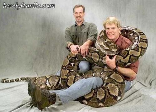 ����� ���� ������ snake-9.jpg