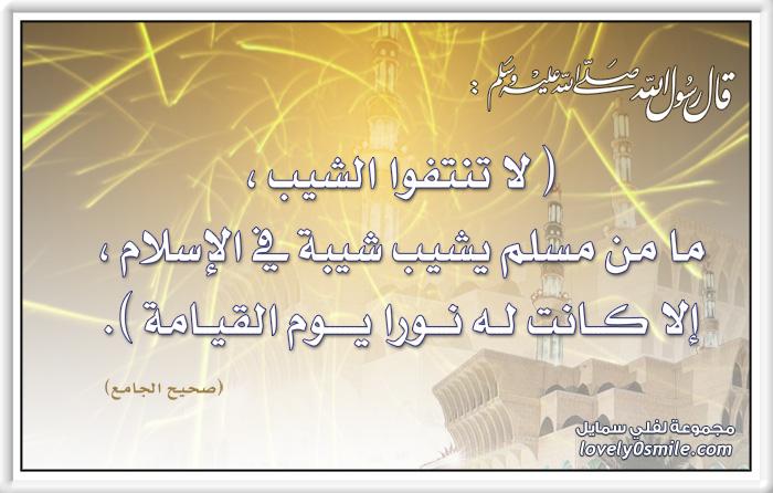 لا تنتفوا الشيب ما من مسلم يشيب شيبة في الإسلام إلا كانت له نورا يوم القيامة