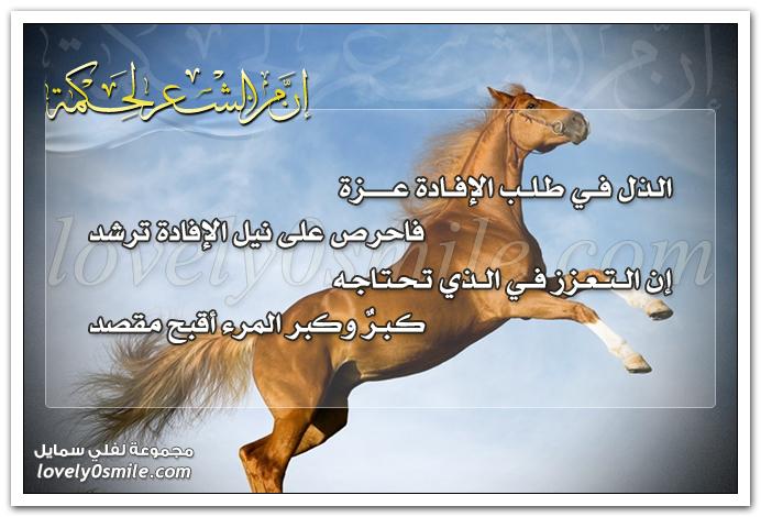 الذل في طلب الإفادة عزة فاحرص على نيل الإفادة ترشد