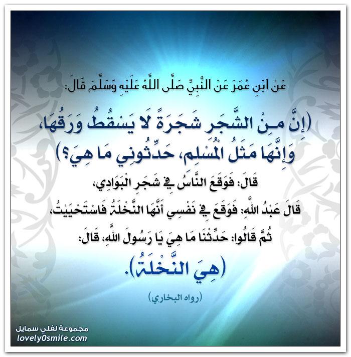 إن من الشجر شجرة لا يسقط ورقها وإنها مثل المسلم حدثوني ما هي؟