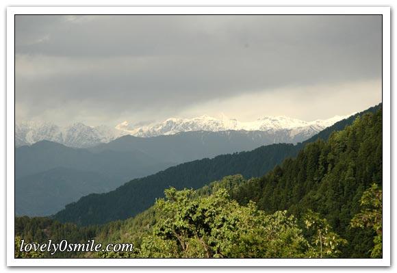 صور من الطبيعة ج2