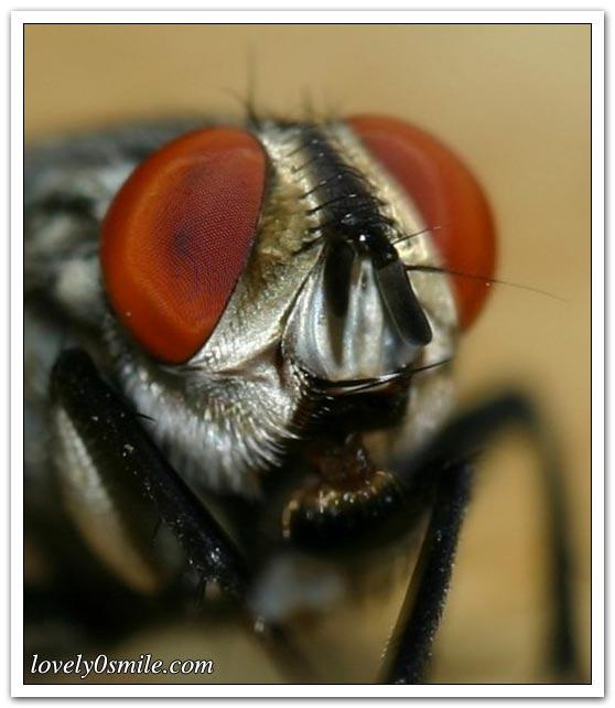 نحلة أسرع من سوبر كمبيوتر - صور