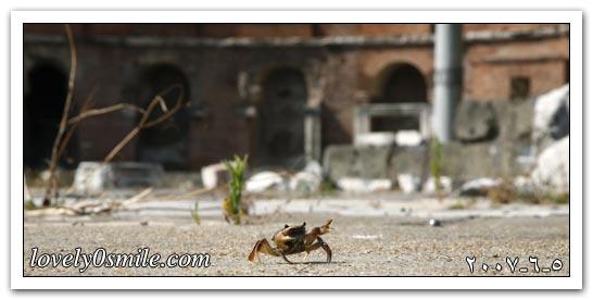 العالم اليوم 5-6-2007 / صور
