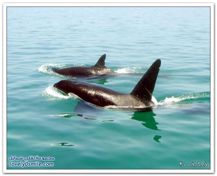 صور العالم اليوم 8-6-2008