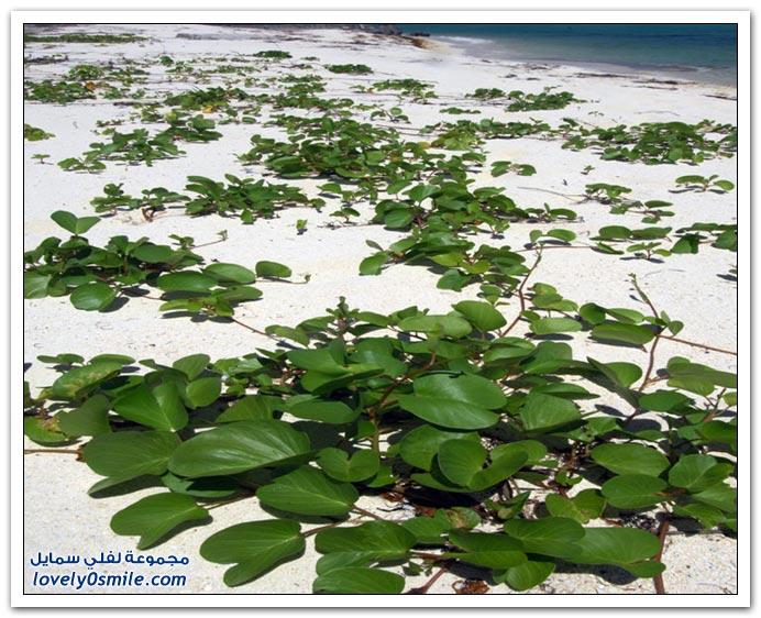 صور العالم اليوم 28-7-2008