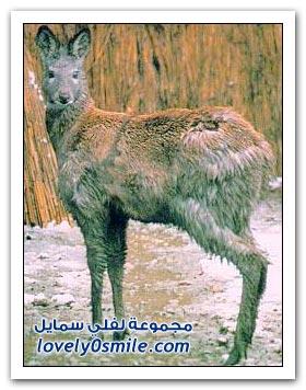 كلمة عربية هي اسم لطيب من الأطياب القليلة التي مصادرها