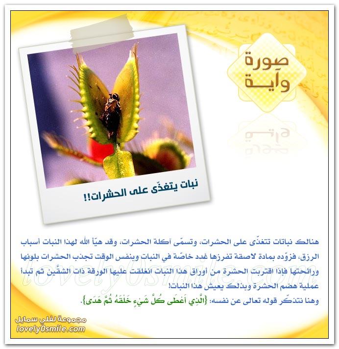 العلاج بالألوان + نبات يتغذى على الحشرات
