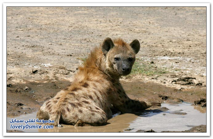 صور من كينيا