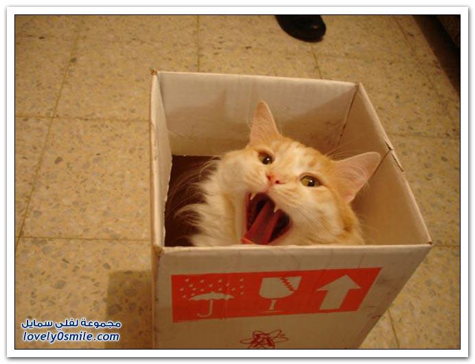 صور لحظات صراخ الأطفال والقطط
