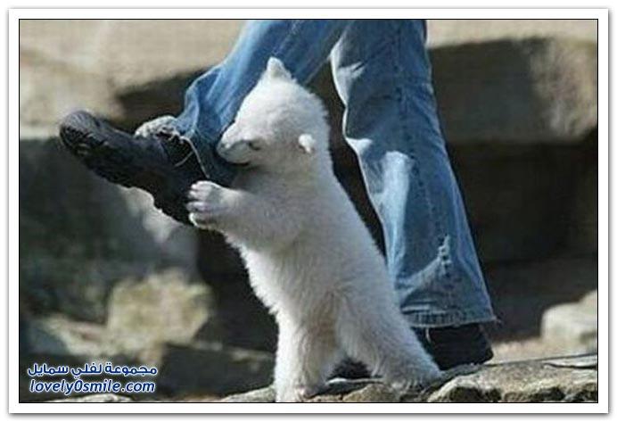 صور أقدار الناس مع بعض الحيوانات
