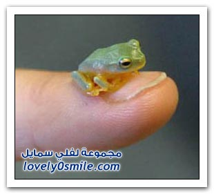 صور حشرات وحيوانات بحجم الإصبع